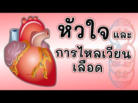 ระบบไหลเวียนเลือด circulatory system