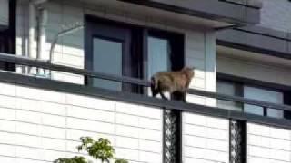 バルコニーの手すりを気持ち良さそうに滑って行く猫.
