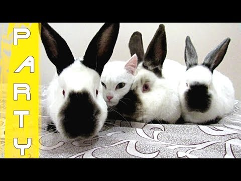 Cat and rabbits - friends