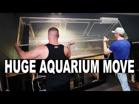 BIG aquarium move - NEW fish room part 2 | The King of DIY