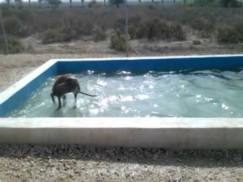 Enthusiastic dog cools off in backyard pool youtube for Garden pool for dogs