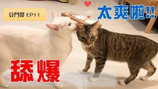 【豆鬥榮 EP11】我這個人很簡單 就是舔爆!!