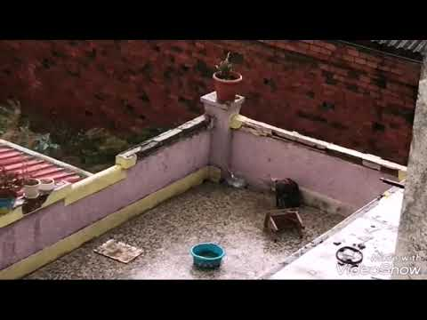 Rescatan a dos perros en malas condiciones en Lugo