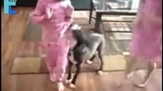 Những Chú Mèo Cứu Chủ khôn nhất thế giới
