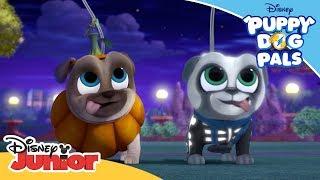 Haunted Halloween | Puppy Dog Pals | Disney Junior Arabia