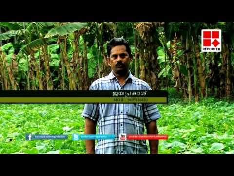 Mannu-Special Agricultural Programme