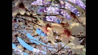 Le quattro stagioni di vivaldi la primavera.