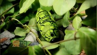 Infrared Remote Magic Bug - Funny Toy for Pranks