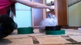 Дрессировка кролика. Первые шаги