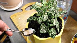 Горшочные мошки на дух не переносят этот порошок! Сыпьте под домашние цветы и растения от мошек!
