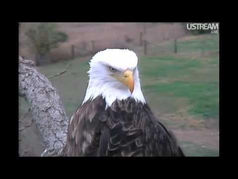 Decorah Eagles - Eagles Calling Selected Scenes 10-26-11