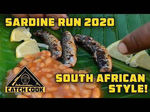 Sardine run 2020 - BIG sharks and tasty sardines cooked South African style