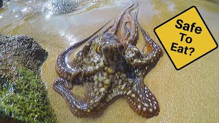 Catch n' Cook Octopus