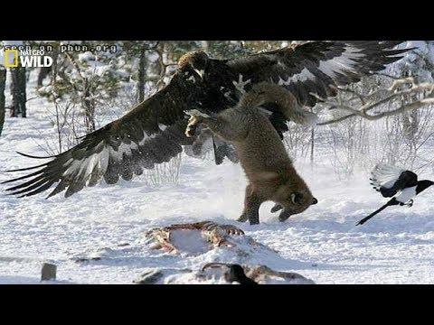 BBC - Life and hunting of large birds (hawks, eagles ...) English subtitles - Wildlife