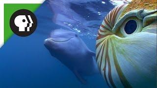 Baby Dolphin Meets 'Spy Nautilus'