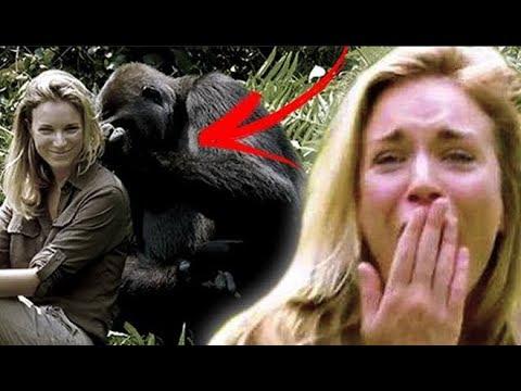 Milionário cuida de gorilas e depois de seis anos apresenta sua esposa a eles, deixando que ela se a thumbnail