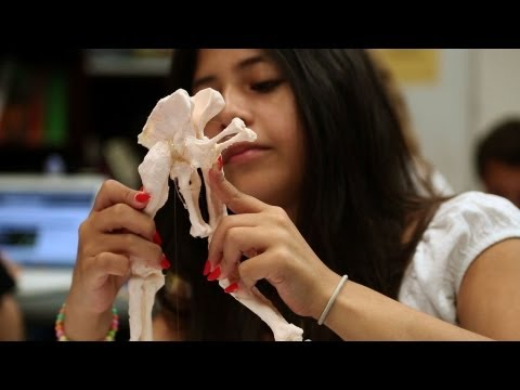 Students Use 3D Printing to Reconstruct Dinosaurs