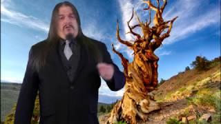 How Dendrochronology Disproves Noah