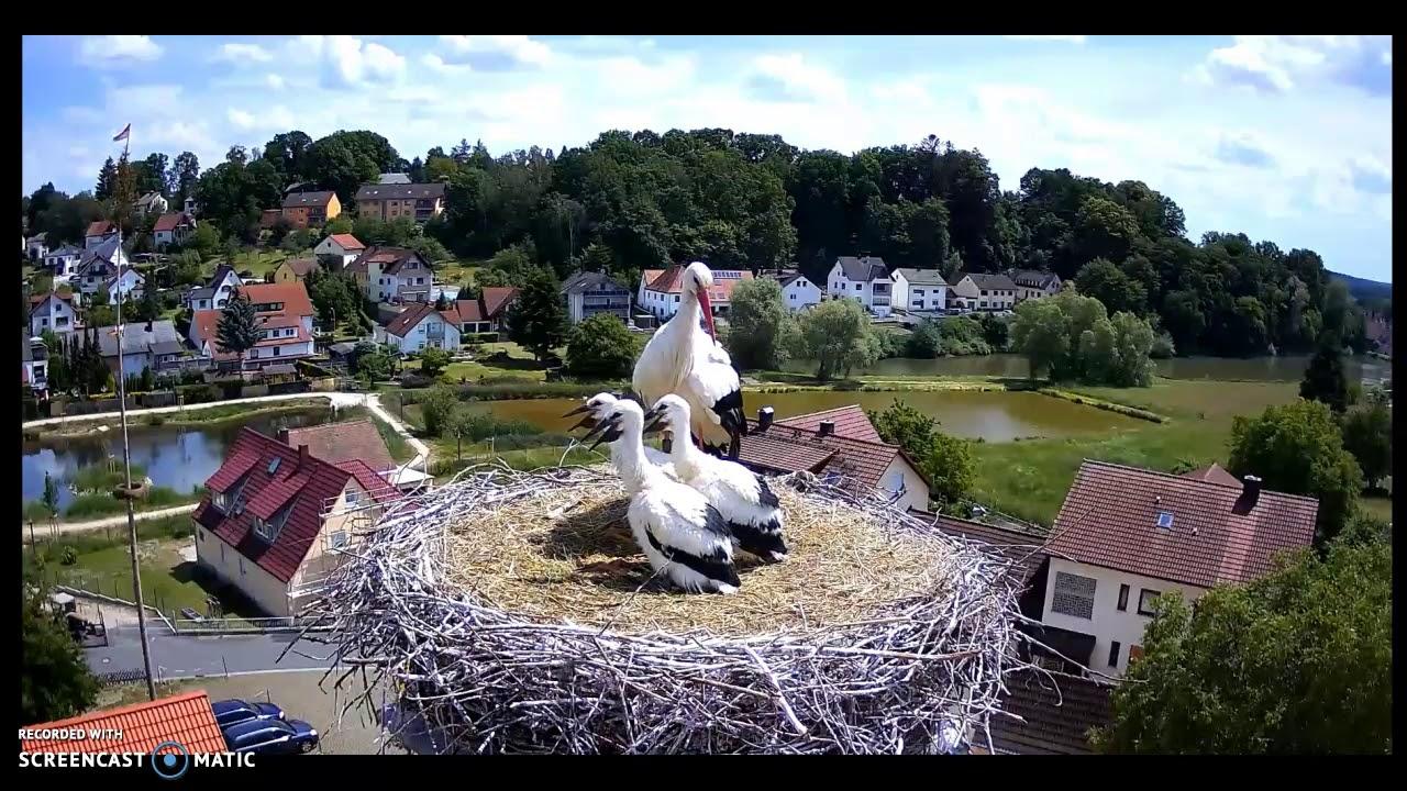 Störche Röttenbach