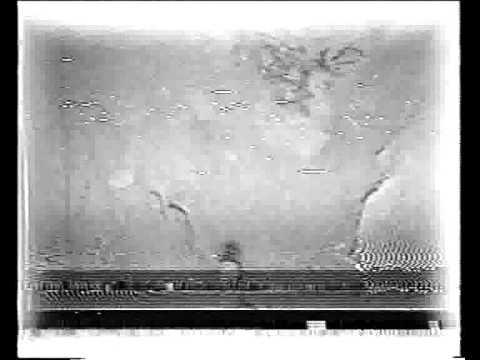 Ufo Under Oak Island