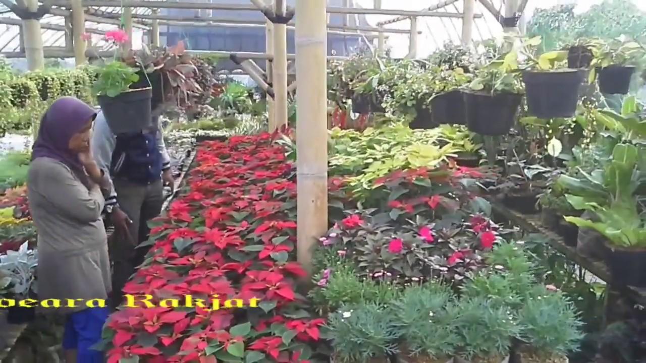 Cihideung Sentra Penjualan Bunga Hias Di Bandung Barat Youtube