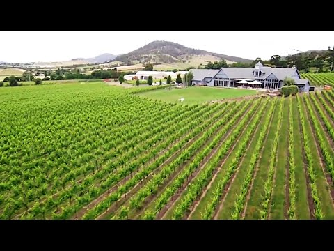 Tasmania Wine – A Year In Review 2016