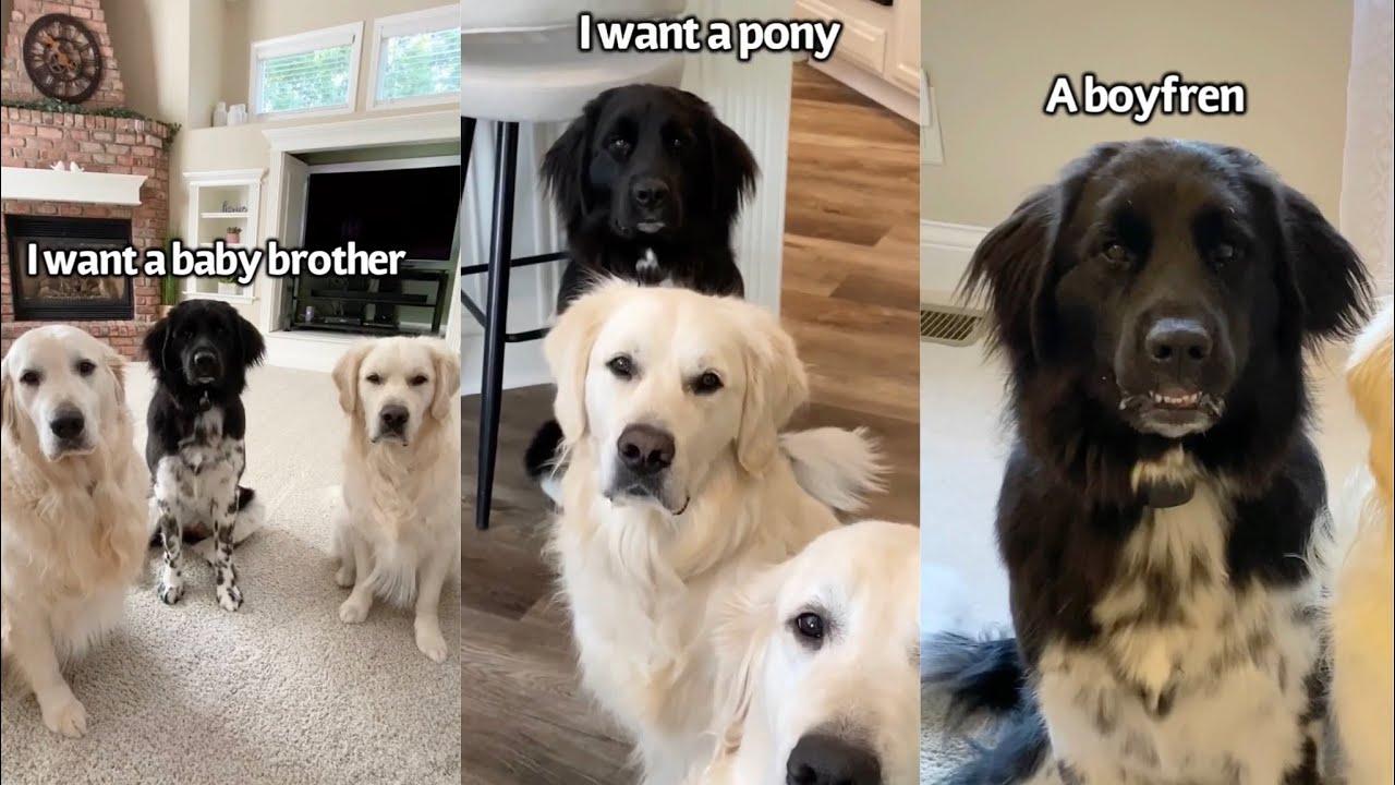 Dogs Birthday Wishlist