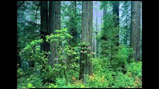 Trees, the Standing People - Music by Galalisa Star; Maha Jivan Muktah