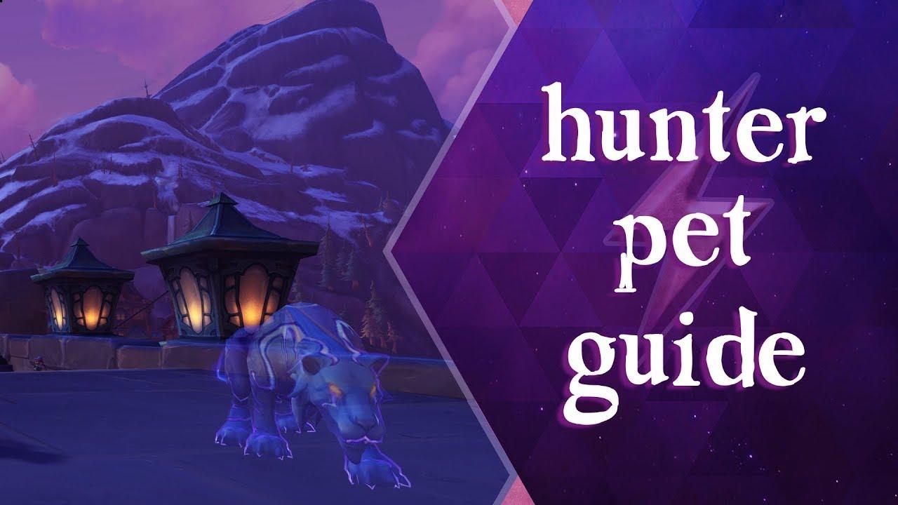 Hunter Pet Guide World Of Warcraft Bfa 8 2 Youtube