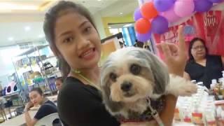 PET FESTIVAL PHILIPPINES. FUNNY PET FASHION SHOW, CEBU