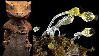 Electron Microscope Images | Alien On Earth : Macro Pictures Of Praying Mantises (Part-3)