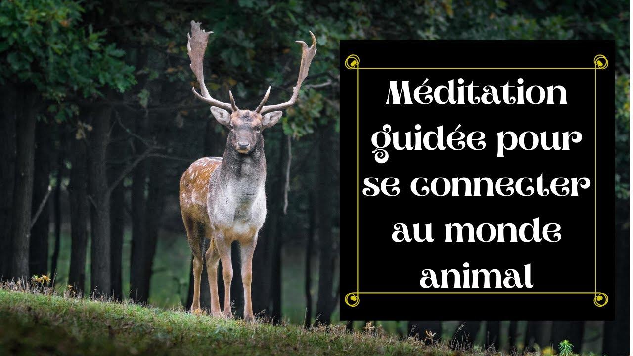 méditation pour se connecter au monde animal