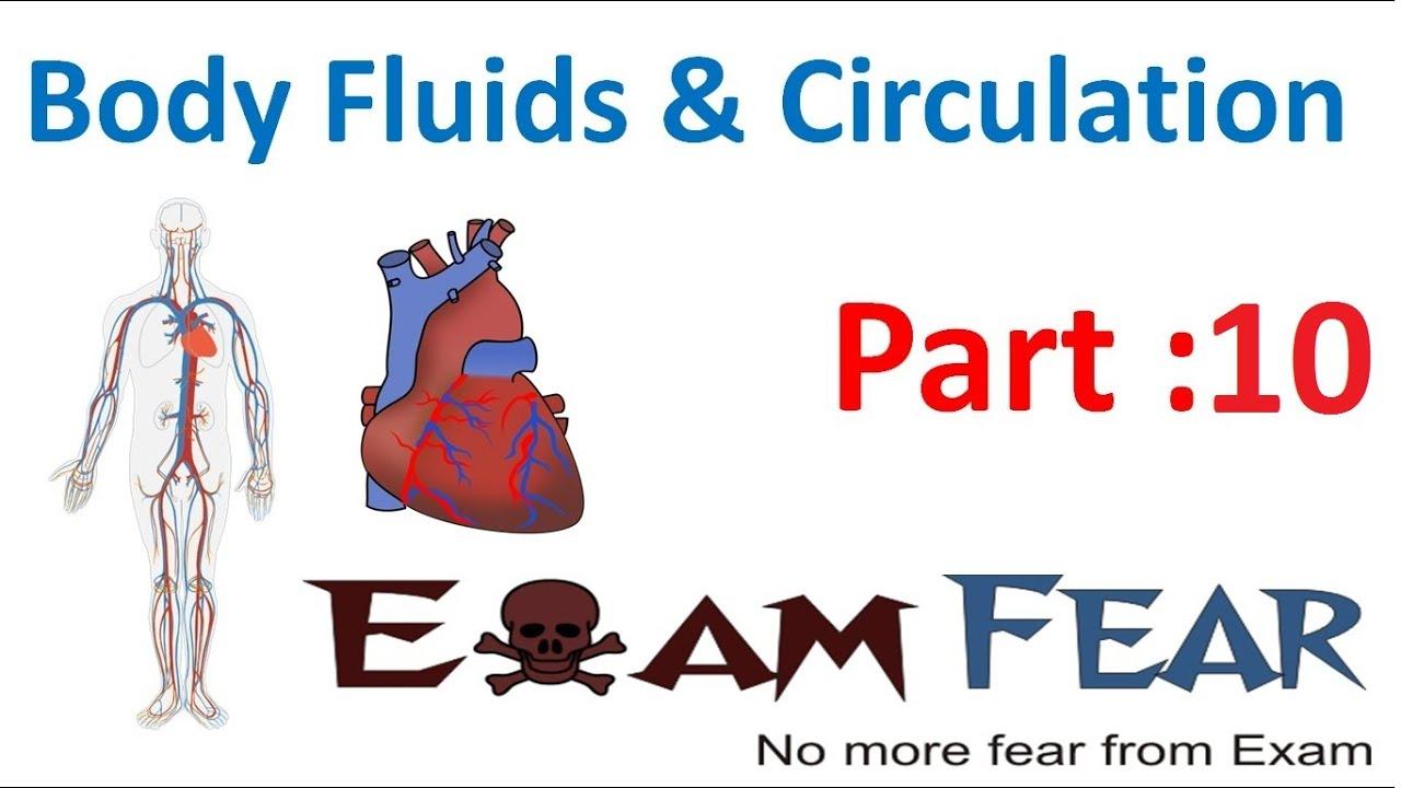 Lymph part of the circulatory system - Biology Body Fluids Circulation Part 10 Lymphatic System Role Bood Vs Lymph Cbse Class 11 Xi