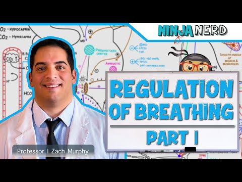 Respiratory: Regulation of Breathing Part 1: Respiratory Centers
