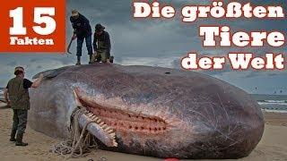 Die 15 größten Tiere der Welt
