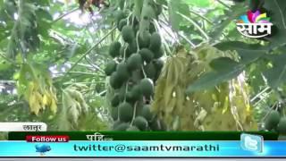 Madan Musle's Papaya success story