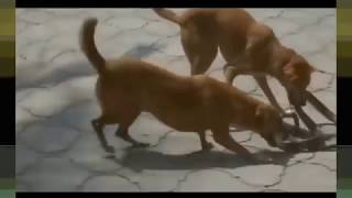 most amazing wild animal attacks dog vs snake craziest animal fights