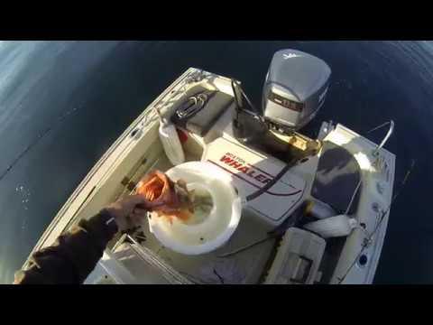 Santa Cruz Deepwater Lingcod and Boccacio Fishing