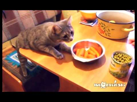 Cats Stealing Food