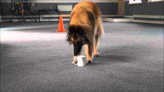 Dog Makes Cup Of Tea. Dog Trick. Www.tammysdogtraining.co.uk