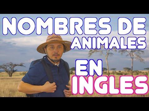 Nombres de ANIMALES en Inglés!!!!