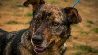 Kizoa Movie - Video - Slideshow Maker: Double Dog Rescue 2016