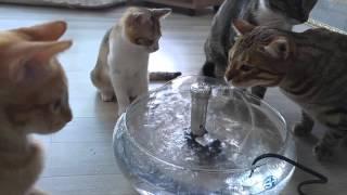 우산분수 - 고양이 물마시기1