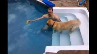 Собаку учат плавать -  прикольно, она боится!