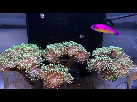 Vlog 9: Nano Reef Cleanup & Major Progress Report on the Studio