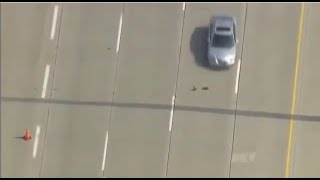 ducks crossing 4 lanes of a busy highway