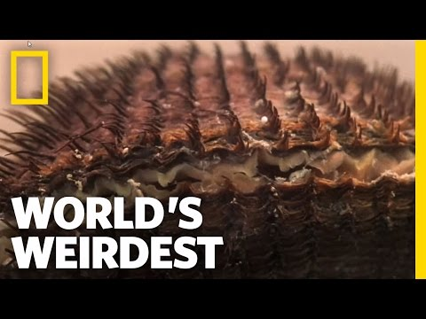 Clams vs. the World | World's Weirdest