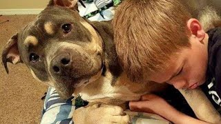 This Poor Pit Bull Was Hit By 13 Different Trains In A Day – But That Wasn't The End Of His Story