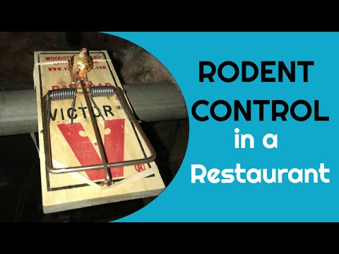 Rodent Control in a Restaurant (episode 52A)