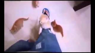 Рыжие скалолазы! Приколы! смешные коты смешные животные! / fun! funny animals! funny cats